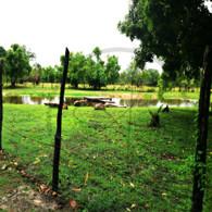 Sand Hill Pond