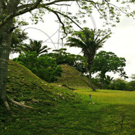 Altun Ha Mound View