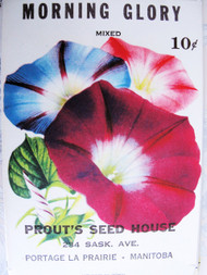 Vintage seed Packet Morning glory