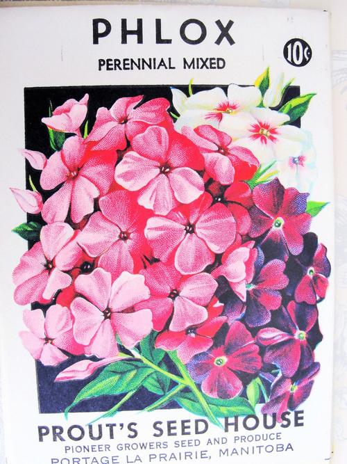 Vintage Seed Packet Phlox Flowers