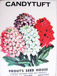 Vintage Seed Packet Candy Tuft Flowers