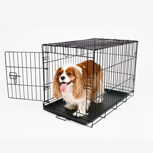 Dog crate medium carlson pet for Dog crates for medium sized dogs