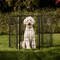 outdoor pet pen