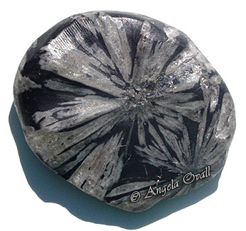 crysanthamum-stone-wm.jpg