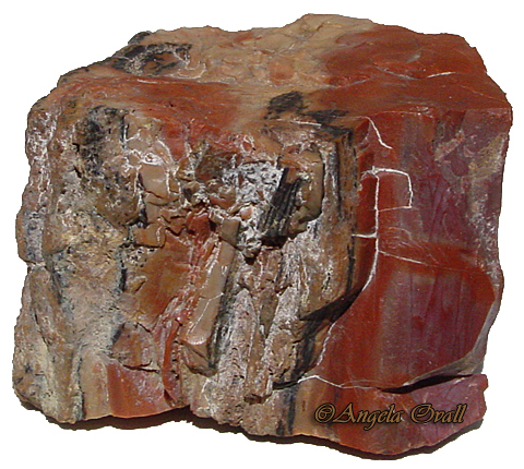 petrified-wood-wm.jpg