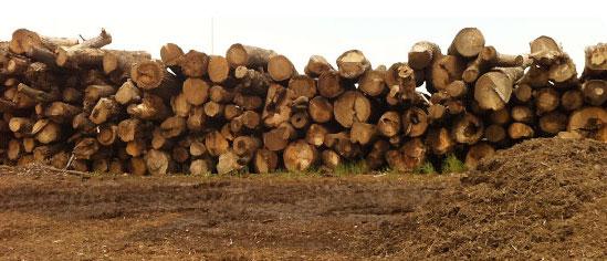 log-pile.jpg