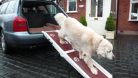 Jetmarine Pet Ramp - In Use