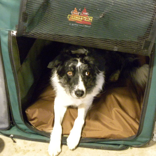 K9 Water-Repellent Bed Cover