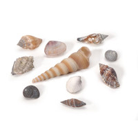 Natural Shells - Assorted Small - 500 grams