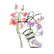 BS77504 - Sweet Pea Sandal (6 blank cards)