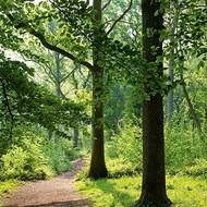 SM14085 - Woodland Walk (6 blank cards)