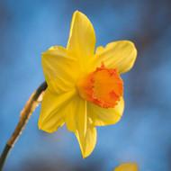 """Complete Spring"" Special Offer"