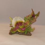 Paphiopedilum Hummingbird & Orchid 400-08