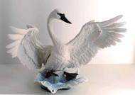 Trumpeter Swan 40266