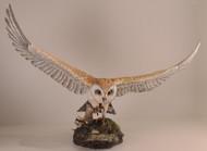 Barn Owl 1005