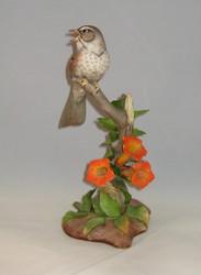 Song Sparrow 40059