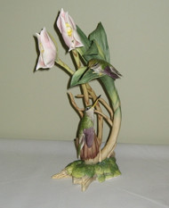 D'Osery's Hermit Hummingbird 40587