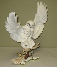 Snowy Owl 10177