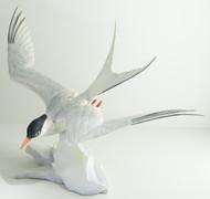 Arctic Tern (40135)