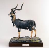 Nyala Antelope 5001