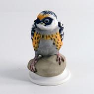 Fledgling Blackburnian Warbler 478
