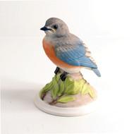 Baby Bluebird 442