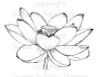Lotus Flower Digital Stamp