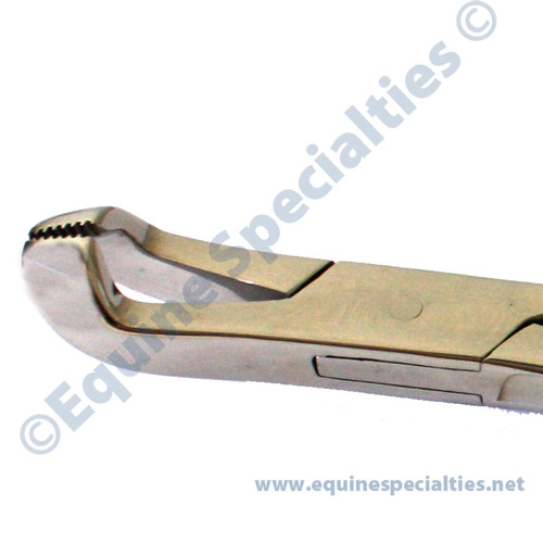 Reynold Style Extractor: for dental work on incisors, small premolars, and extraction  of caps. Equine Dentistry Tools