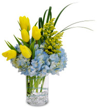 This fresh cut arrangement features blue hydrangeas, yellow tulips and aster.  This winning color combination is perfect for many occasions.