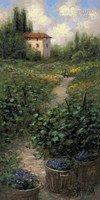 Vineyard I 12x24 LE Signed & Numbered - Giclee Canvas