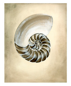 Seashells I Unframed Giclee with Crackle Finish
