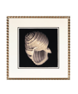 Dramatic Seashells C Framed Giclee