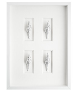 Silver Spindle Shells in White Shadowbox