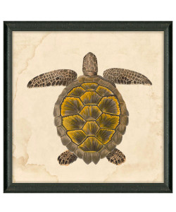 Nile Voyage Turtle, Framed Print