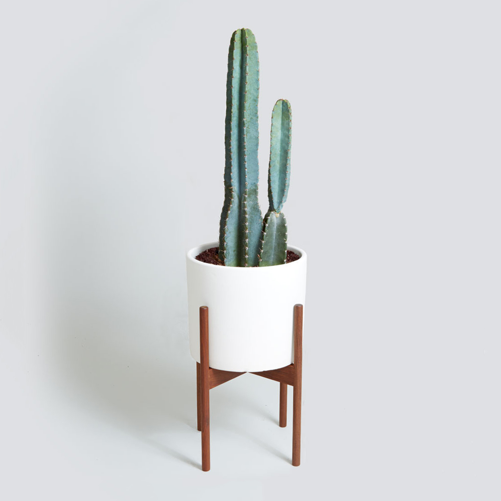 The Case Study Cylinder, Cacti