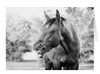 Fun thinking of you equestrian greeting card