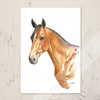 Akhal-Teke Horse Head equestrian watercolor Note Cards.