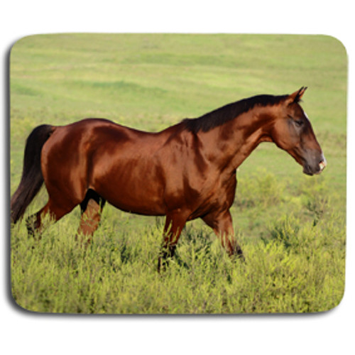 Beautiful Bay Horse Mousepad
