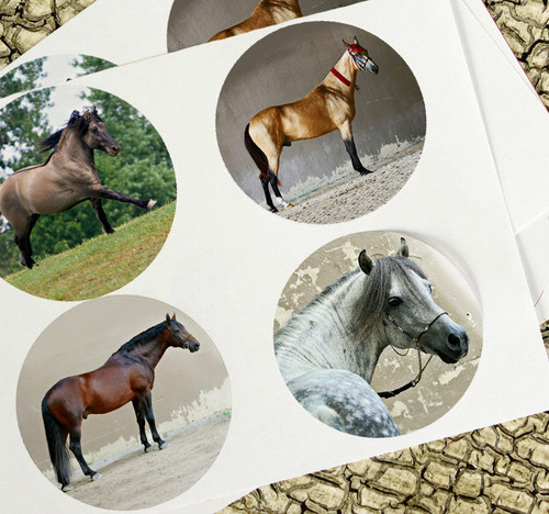 rare horse breeds stickers set