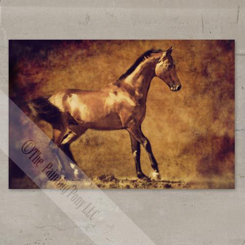 Rustic Akhal-Teke Stallion Fine Art Gallery Wrap Print