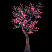 Cherry Blossom Tree 7 Feet 800 Led Lights Pink Color Morgan Style