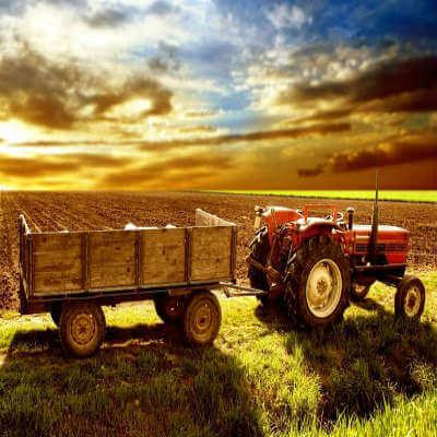 Storewide Harvest Sale