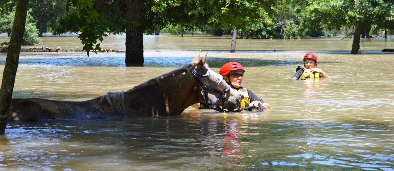 Photo Credit: Houston SPCA