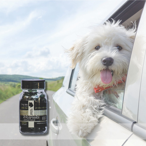 im·bue™ k9capsules small breed - 5mg premium CBD capsules - 30 count
