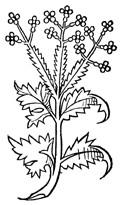 Lemon Verbena Herb 1/2 oz