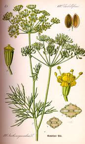 Dill Seed, Whole 1 oz