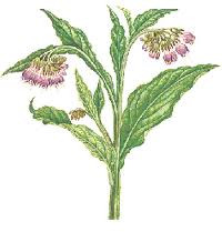 Comfrey Leaves, Cut 1/2 oz