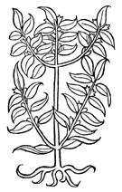 Bay Leaf Whole .3 oz