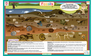 Fossils Placemat