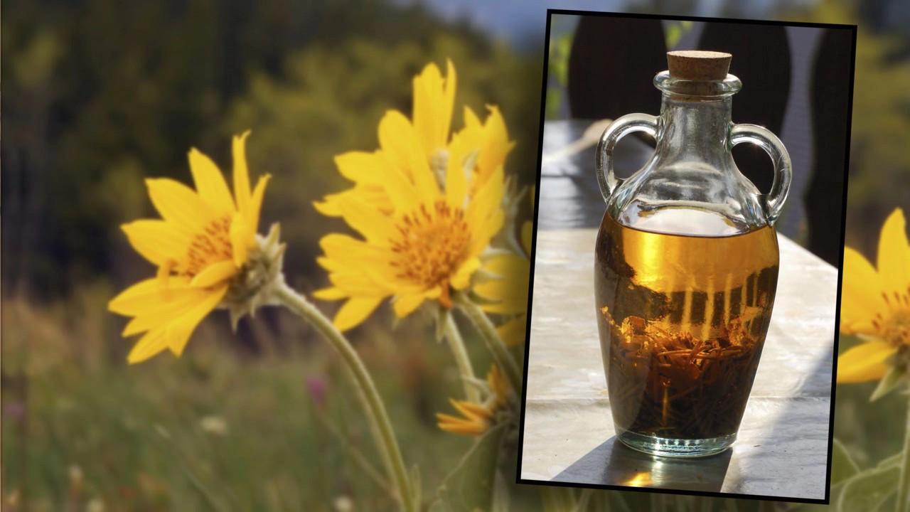arnicaflowerextractfromvideo2.jpg
